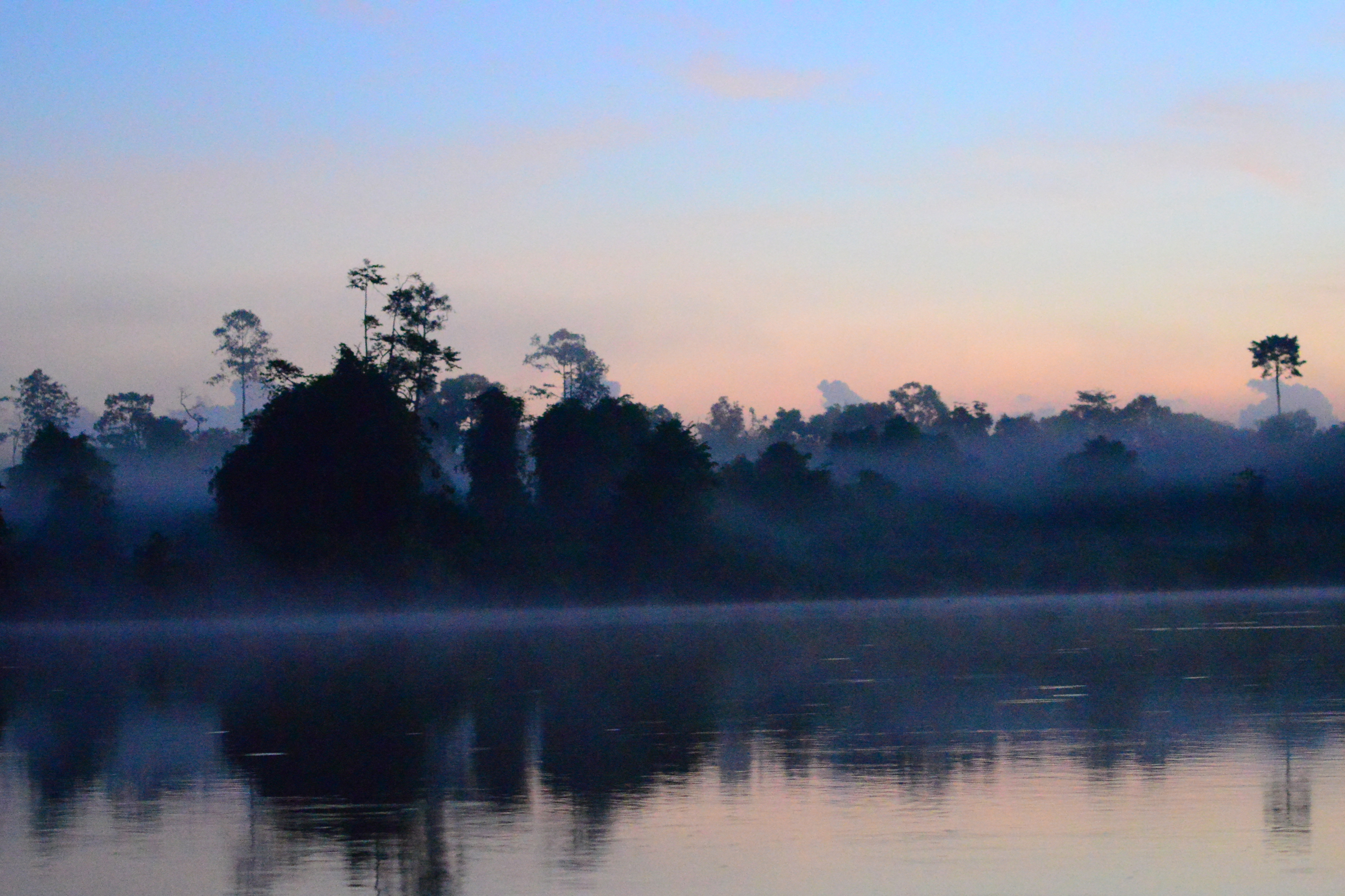 Dawn Borneo (Sabah)