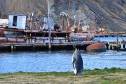 South Georgia Grytviken