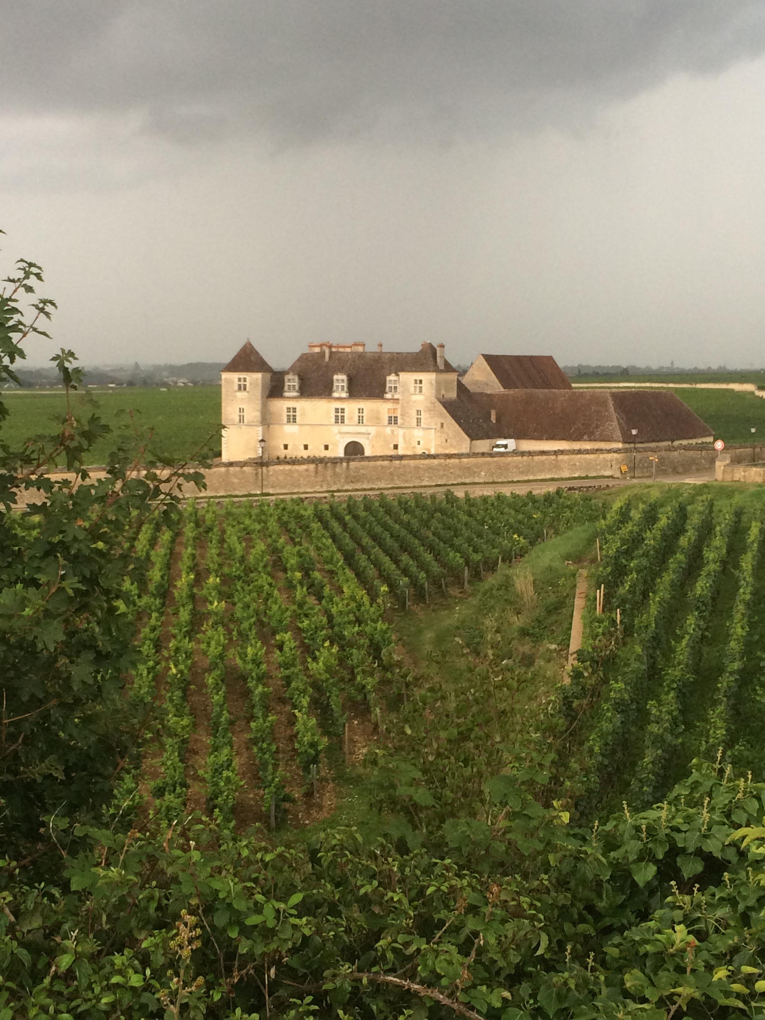Clos Vougeot Burgundy