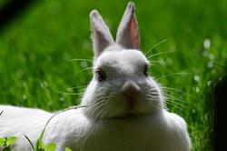 Happy rabbit, 2016