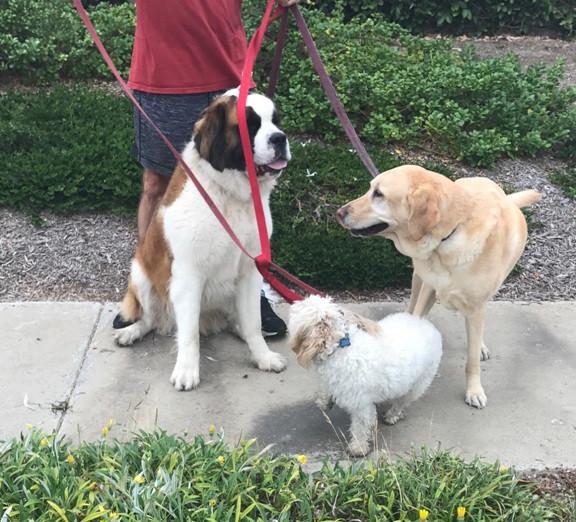3-Dog Diversity