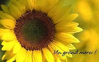 Carte-de-remerciement-anniversaire-avec-une-photo-de-fleur-de-tournesol.jpg