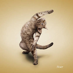 133641,xcitefun-yoga-cat-02.jpg