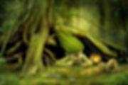 quercia-1.jpg