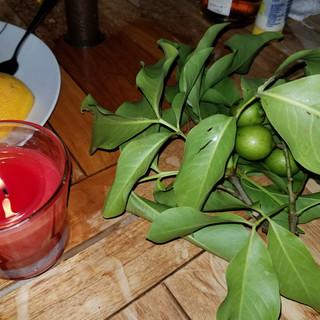 light a candle & eat gnaps