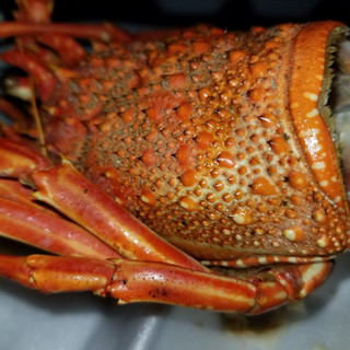 try the lobster at Oistin's