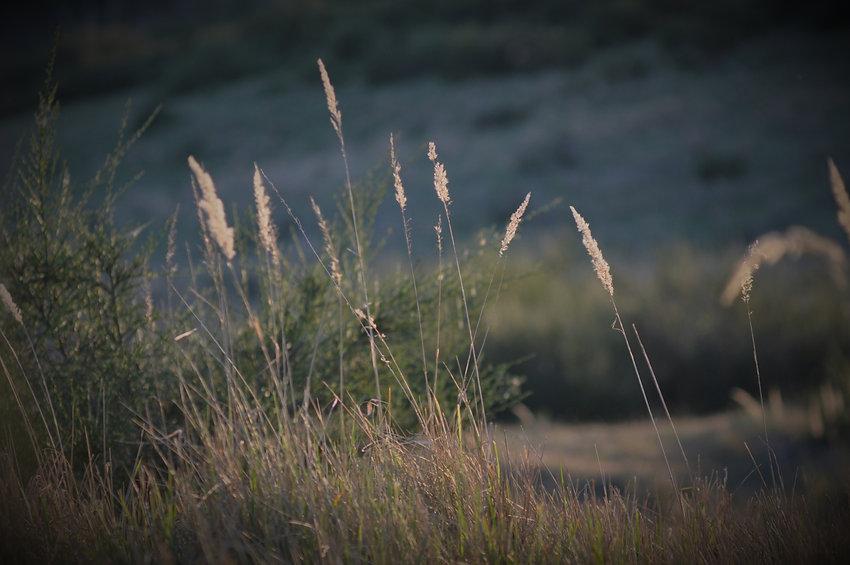 (c) Lukas Plath 2021 Heide Grass