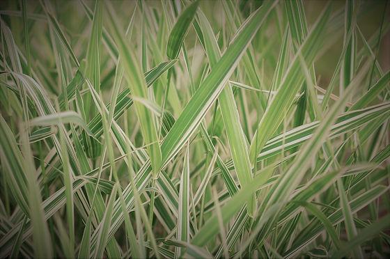 (c) Lukas Plath 2021 Gruenes Grass