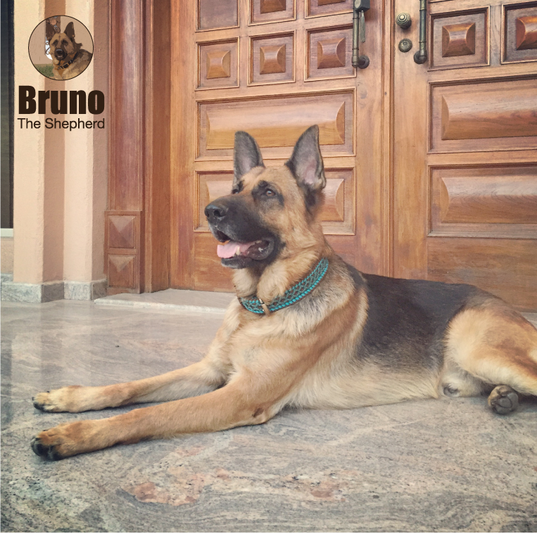 Bruno The Shepherd