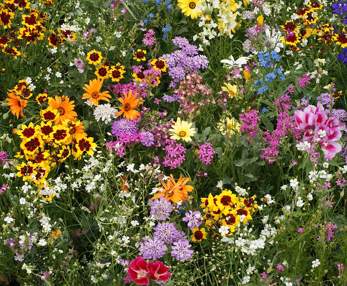 All Annual Wildflower mix.jpg