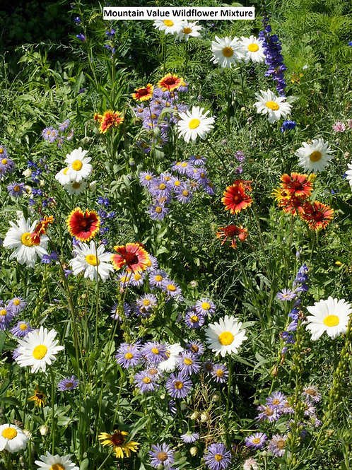 Mountain Value Wildflower Mix