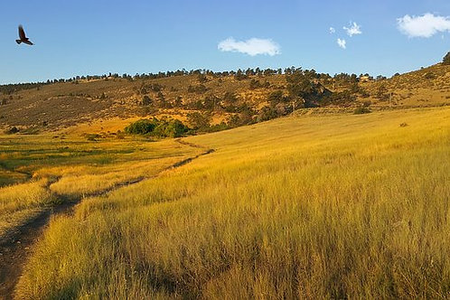 Rocky Mountain Native Mix