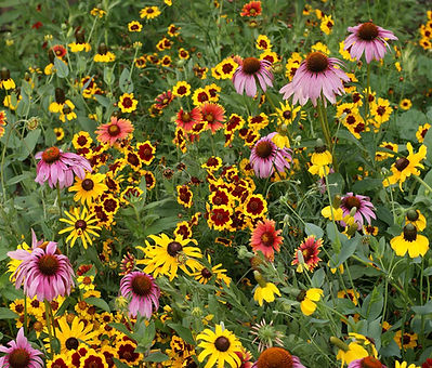 Rocky Mountain Wildflower mix.jpg
