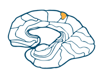 Post Central Gyrus