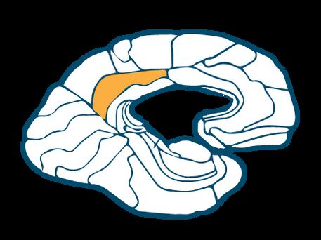 Dorsal Posterior Cingulate Cortex