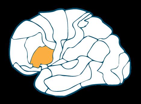 Inferior Frontal Prefrontal