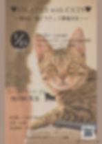 第3回猫ピラティス告知.jpg