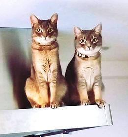 やべようこさんの猫.jpg