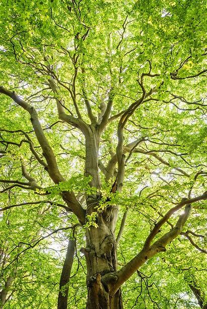 オーガニック望診断講座木のエネルギーHP05.jpg