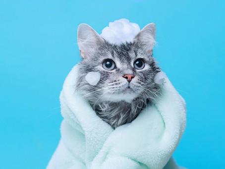 猫の手作りご飯レシピ メリットや栄養素、頻度を解説!