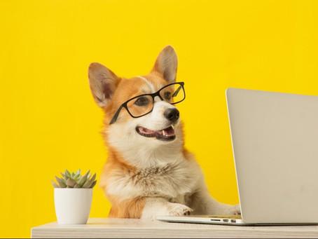 人気の犬の手作りご飯レシピ メリットや注意点も解説