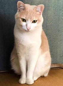 受講者西田さんの猫.jpg