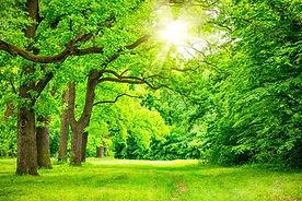 オーガニック望診断講座 木のエネルギ-