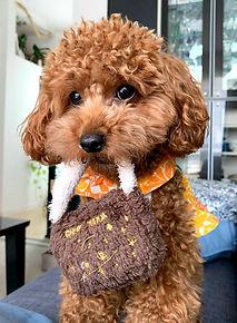 東京 G Veggie 愛犬手作り無添加ごはん講座 認定資格取得 愛犬にも無