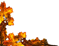 autumnsleaves-2.png