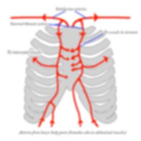 Respiheart-bröstkorg.jpg