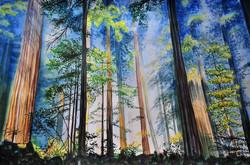 Wald Aquarell 50x65cm