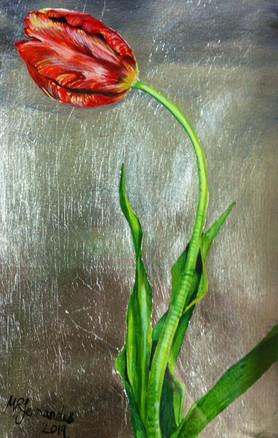 tulip 200 €