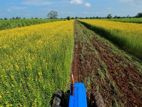 Nutrição de Plantas - O Balanço Nutricional Ideal
