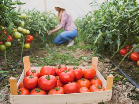 Coronavírus: Conheça as Políticas Públicas que Estão Ajudando Agricultores Familiares.