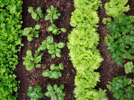 Policultura: sustentabilidade e benefícios ao produtor