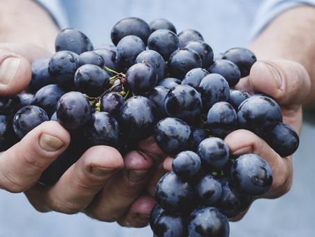 Produção de uva no Estado de São Paulo para processamento de vinhos e sucos varietais