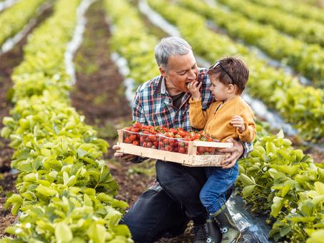 Já se alimentou hoje? Conheça a importância dos agricultores familiares na sua alimentação