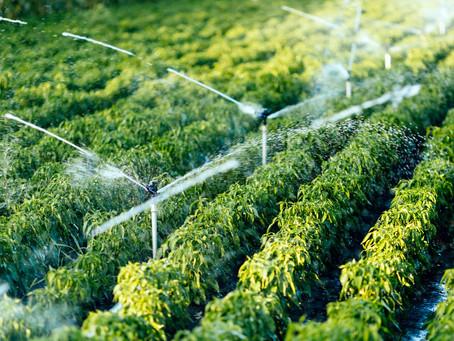 Sistemas de Irrigação: Luxo ou Necessidade?
