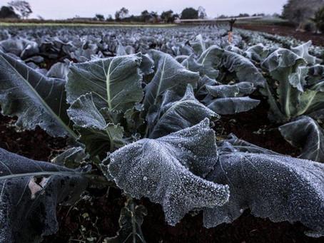 Os efeitos das mudanças climáticas nas lavouras brasileiras