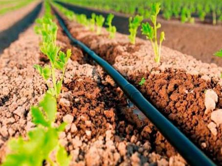 Irrigação por gotejamento e seus benefícios