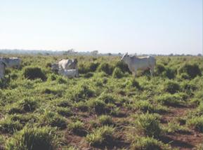 Diferentes Níveis de Degradação das Pastagens Brasileiras