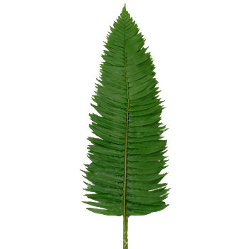 Large Fern (20)