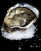conservation des huîtres