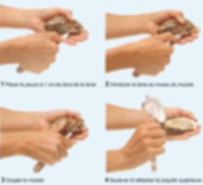 Ouverture d'une huître pas à pas