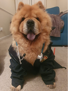 ChowChow.png