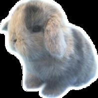Minilop Arleco