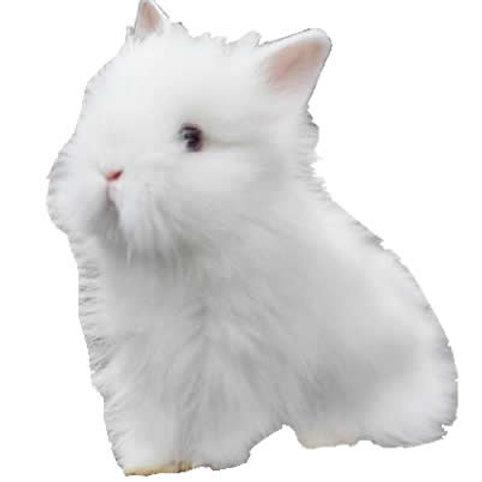 Minileon Albino