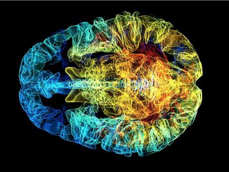 Smegenų gelmėse