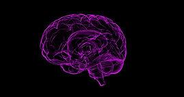 neurologicalpic.jpg