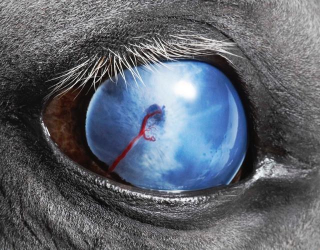 Blind Eye, Equus © Tim Flash